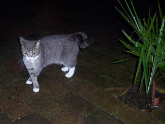 Kat Friend